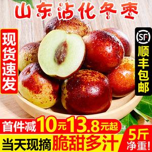 山东沾化冬枣5斤枣子新鲜当季时令水果甜脆青枣孕妇大红枣10包邮