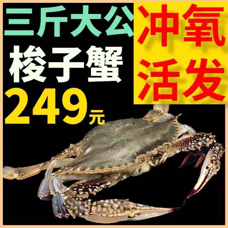 新鲜超大梭子蟹鲜活特大海螃蟹现货公蟹三斤装白蟹飞蟹包邮非舟山