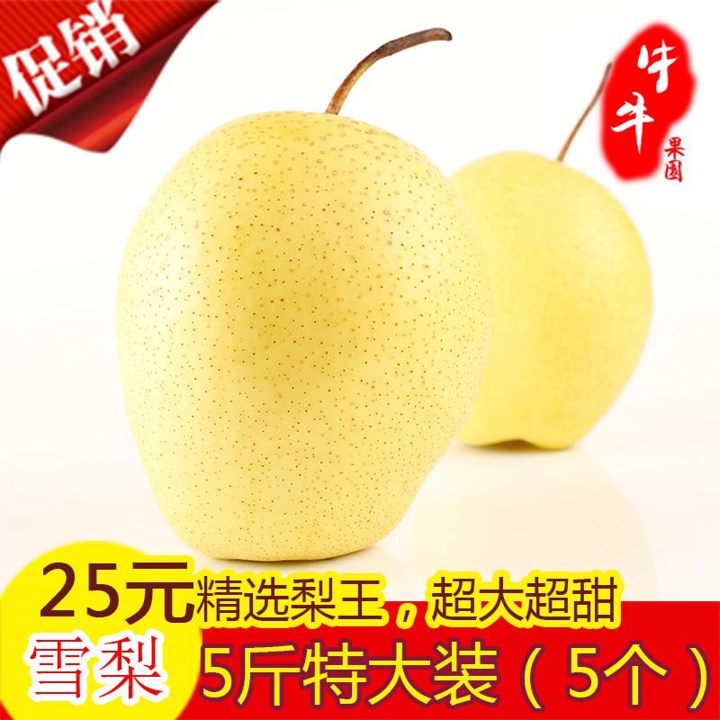 正宗雪梨赵县特产雪花梨王新鲜水果梨5斤特大精品装包邮单果500克