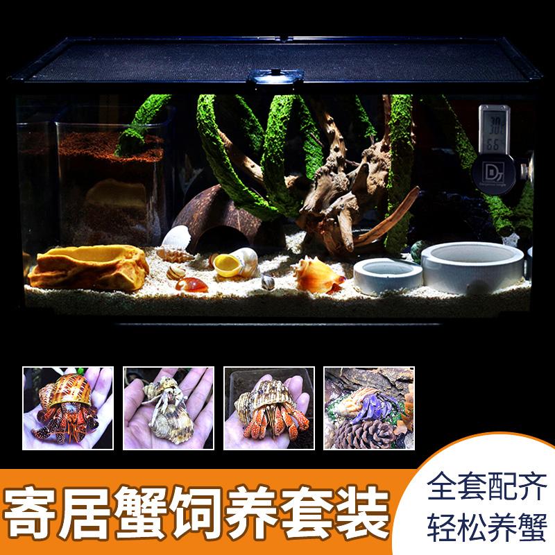 寄居蟹懒人套餐新手养殖搭配陆生宠物活体饲养箱设备主题造景缸