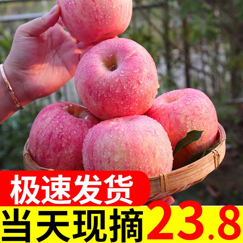 现摘山东烟台栖霞一级红富士苹果水果10斤新鲜大脆甜当季整箱包邮