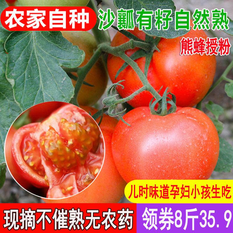 8斤熊蜂沙瓤水果西红柿新鲜蔬菜孕妇自然熟农家无公害番茄现摘
