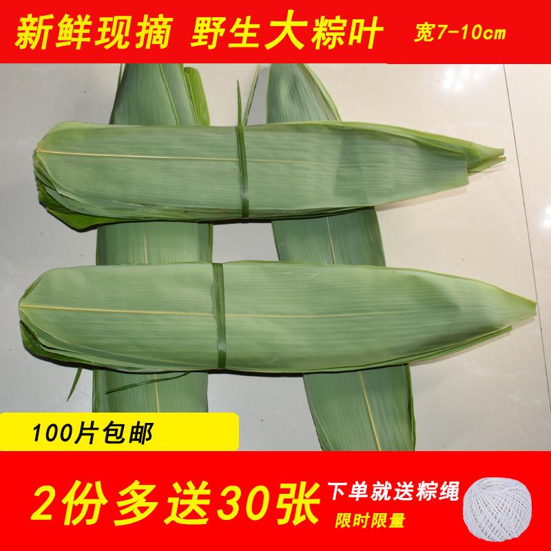粽叶新鲜现摘大粽子叶箬叶纯天然野生干棕叶100张包邮竹叶送粽绳