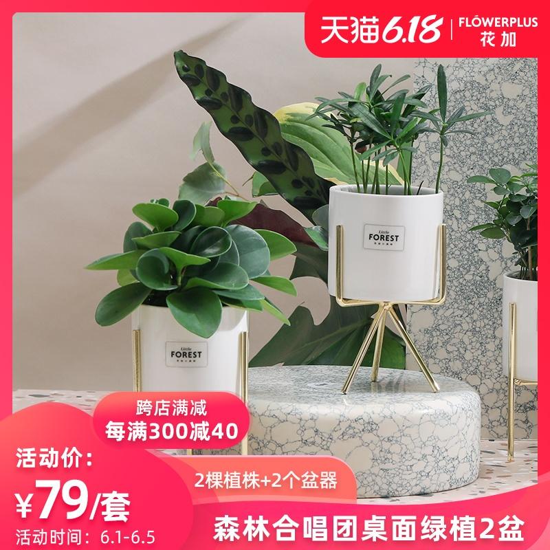 FlowerPlus花加土培绿植含盆栽吸除甲醛办公室桌面绿植净化空气
