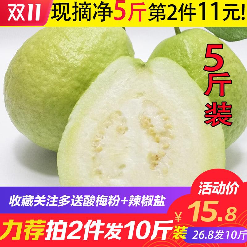 广西现摘白心番石榴芭乐5斤装 清脆清甜 当季新鲜热带水果包邮