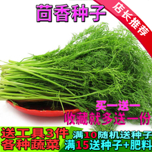 Fennel seed fennel seed fennel stubble bulb vegetable seedling balcony seed multiple harvest four seasons sowing package mail