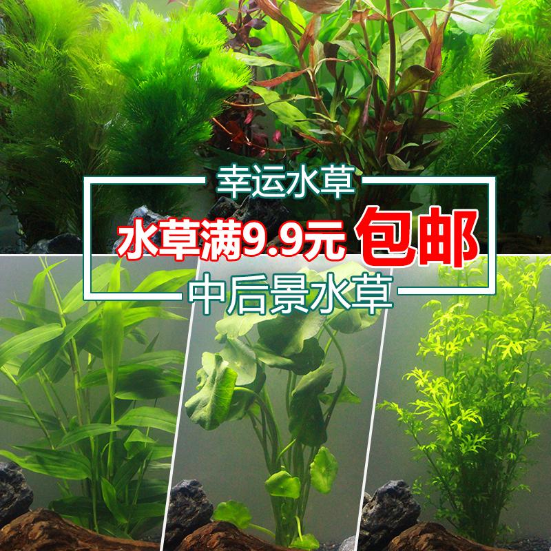 Наполнение для аквариума Артикул 569417162923