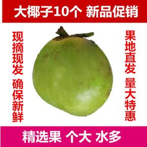 发10个大果海南新鲜椰子文昌带皮椰青青椰汁多 嫩椰孕妇水果包邮