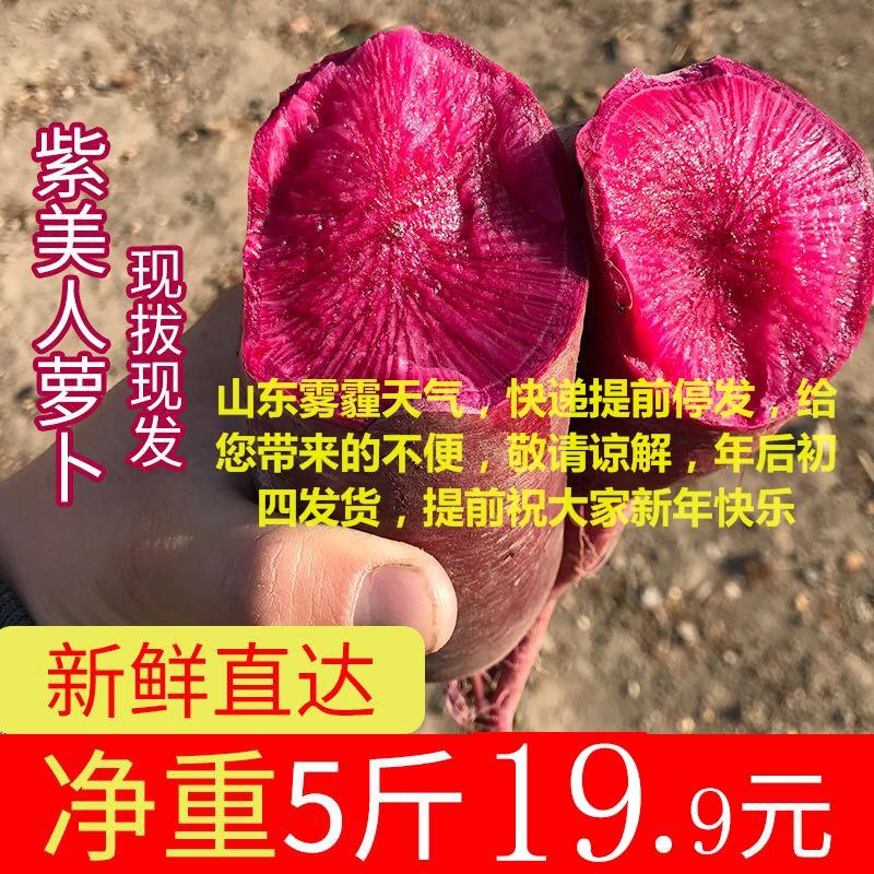 新鲜非潍坊水果萝卜紫萝卜红心美萝卜包邮紫凤梨5斤紫美人萝卜