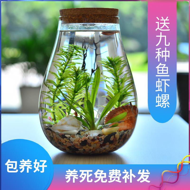 微景观生态瓶观赏鱼虾好养活 真水草迷你桌面小鱼缸 DIY作业礼物