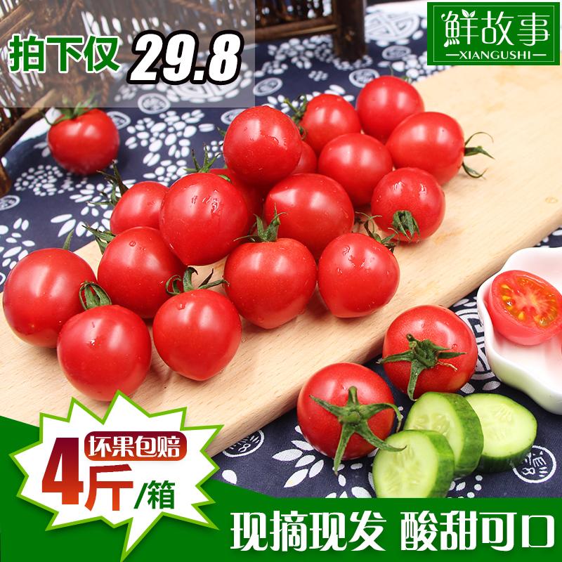 鲜故事现摘贝贝圣女果新鲜蔬菜小番茄樱桃西红柿小西红柿4斤包邮