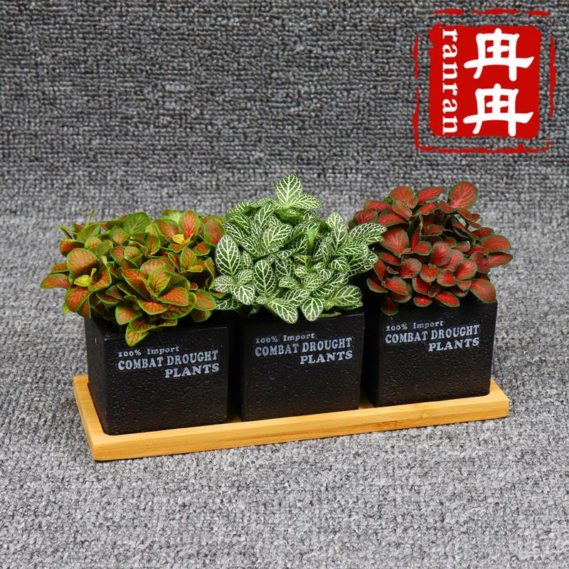 网纹草盆栽植物室内办公桌面绿植观叶植物花卉盆栽防辐射四季常青