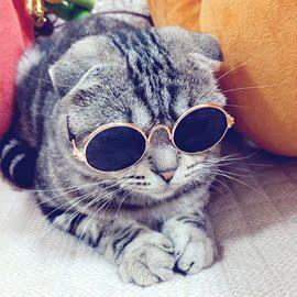 潮流猫咪眼镜宠物猫搞怪diy小狗装配迷你原创墨镜太阳镜社会道具图片