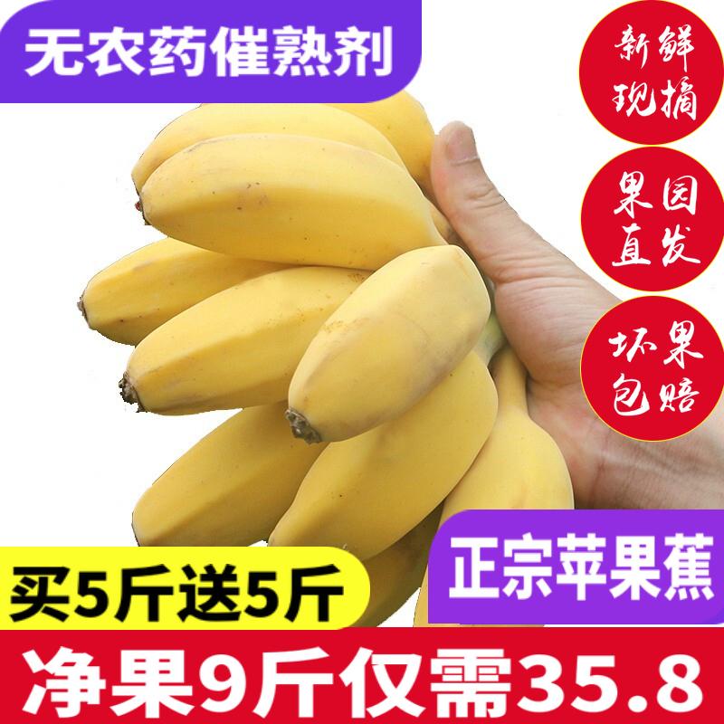 苹果蕉粉蕉新鲜10斤苹果粉焦非小米蕉水果批发包邮当季皇帝蕉香蕉