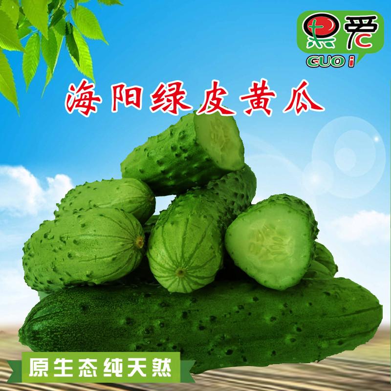山东旱黄瓜 新鲜水果小黄瓜5斤白玉黄瓜脆嫩带刺绿皮黄瓜蔬菜水果