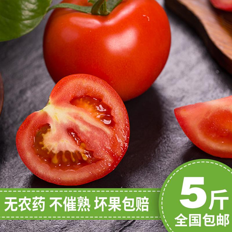 番茄山东齐达利西红柿新鲜自然熟5斤纯天然生吃蔬菜水果农产品