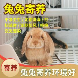 北京寄养/家庭兔子寄养/兔兔托管/宠物兔代养/长短期寄养可接送/图片