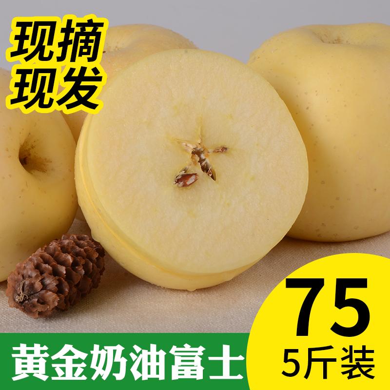 现摘现发山东烟台 栖霞奶油黄金富士冰糖心苹果 新鲜苹果水果5斤