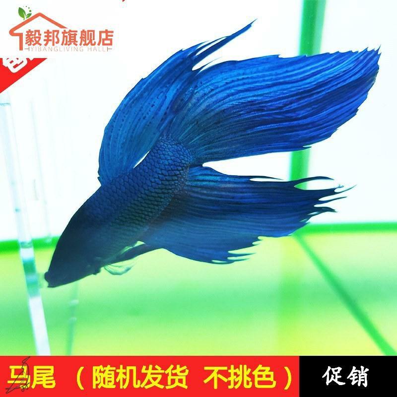 Креативные аквариумы Артикул 617694621067