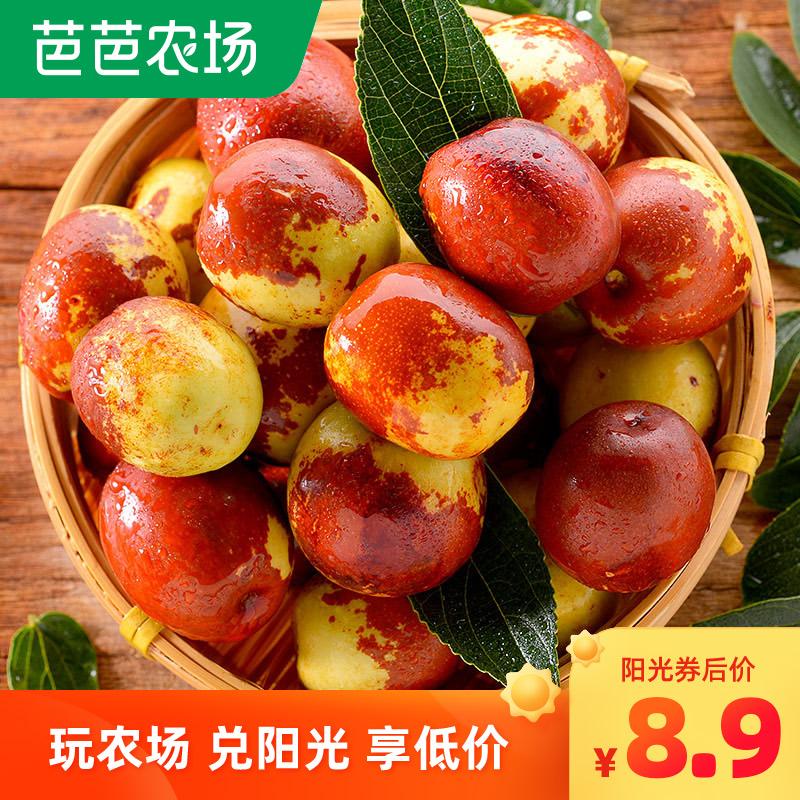 山东沾化冬枣新鲜5斤单果11g起脆甜大枣鲜枣青枣新鲜当季水果