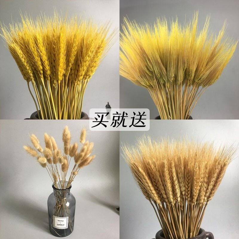 麦子带花立体大麦干花家居干的摆件花瓶饰物艺术田园插花禅意215