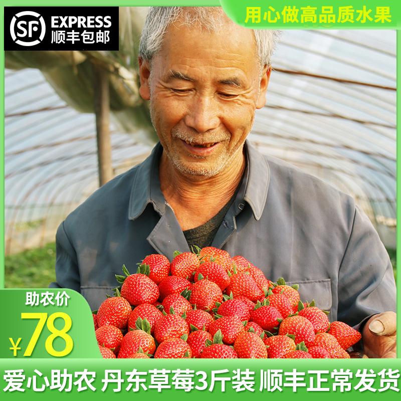 【正常发货】丹东99大草莓3斤新鲜当季孕妇水果牛奶油草莓发顺丰