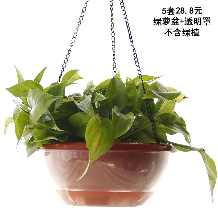 绿萝花盆自吸水 室内大号创意吊篮盆水培懒人透明双层塑料花盆