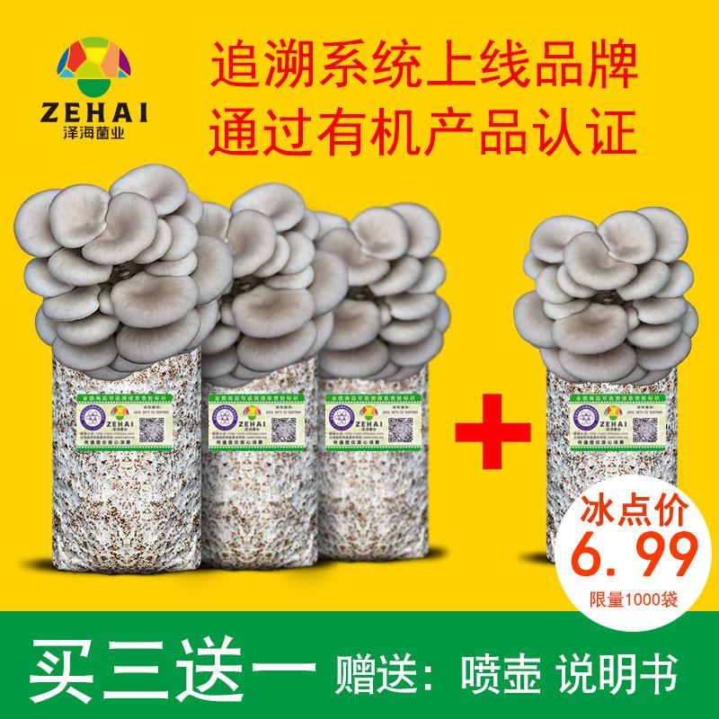 蘑菇种植包平菇菌包种蘑菇食用菌菌种家庭种植蘑菇菌种子新鲜菌菇