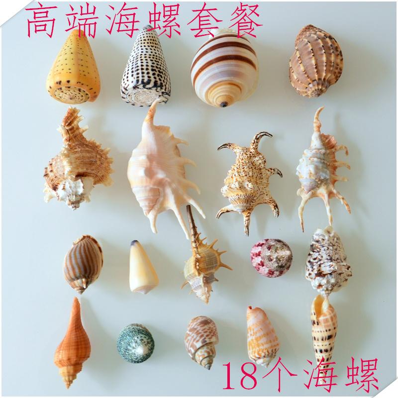 新款包邮可打孔海螺贝壳套餐diy鱼缸珊瑚地中海装饰寄居蟹壳道具