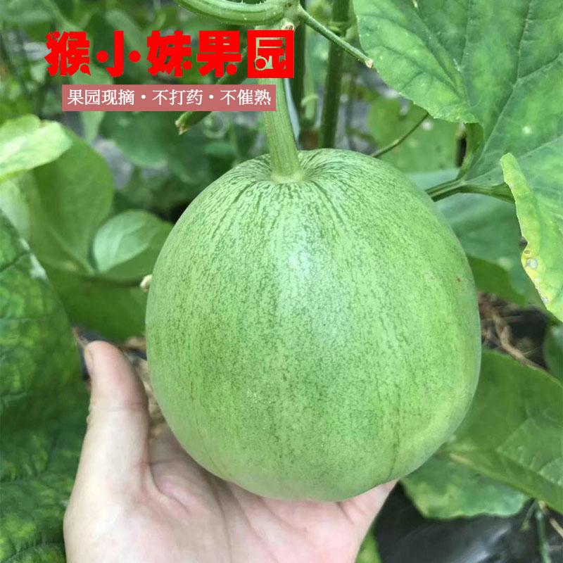 绿宝石 山东青州特产包邮孕妇新鲜水果果园现摘特价5斤 甜瓜