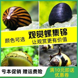 观赏螺活体淡水清洁除藻螺斑马螺洋葱螺苹果螺杀手蜜蜂螺黑金刚螺