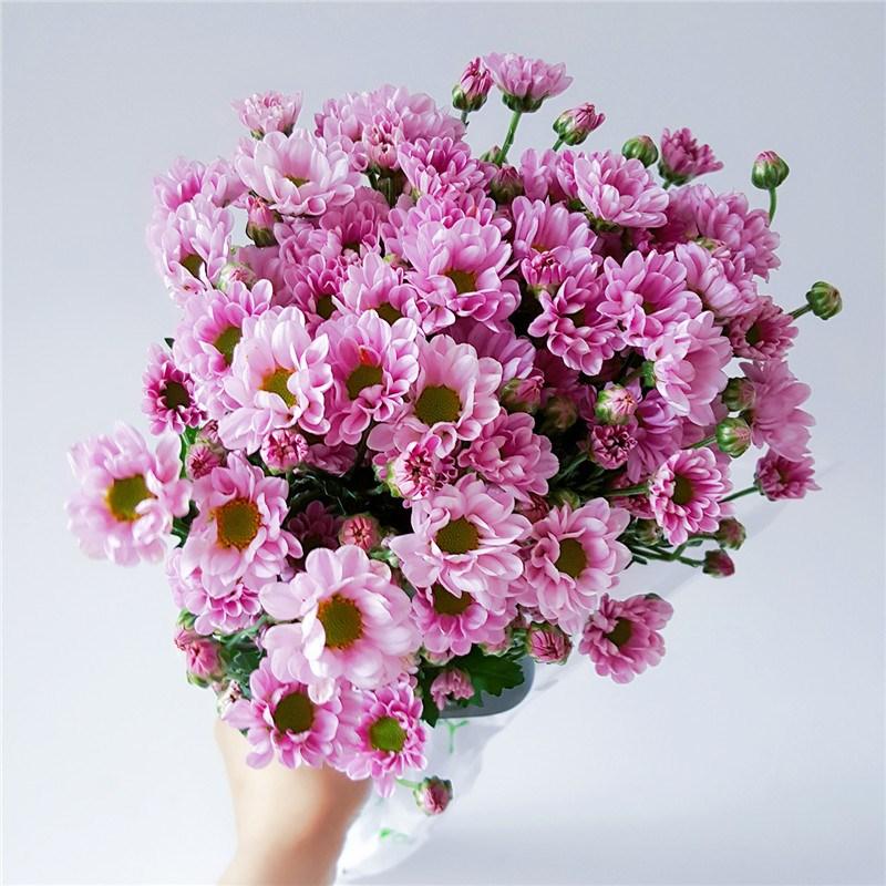 鲜花速递小雏菊花束粉色绿色办公室家用花10枝大份花期长航空包邮