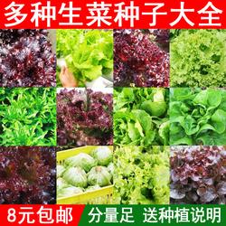 生菜种籽蔬菜种子罗马生菜孑四季紫叶蔬菜红叶阳台奶油生菜结球籽