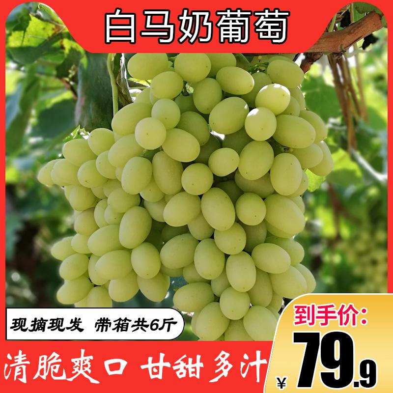 新鲜水果马奶葡萄夹河白马奶葡萄孕妇应季葡萄当季绿青提带箱6斤