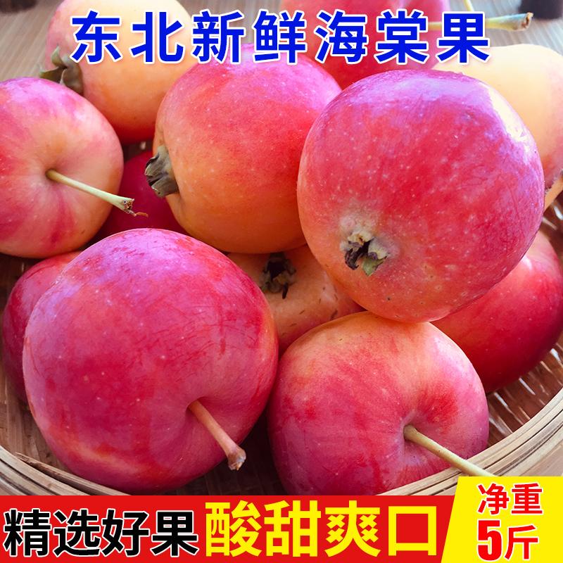 东北5斤新鲜小苹果当季特产海棠果