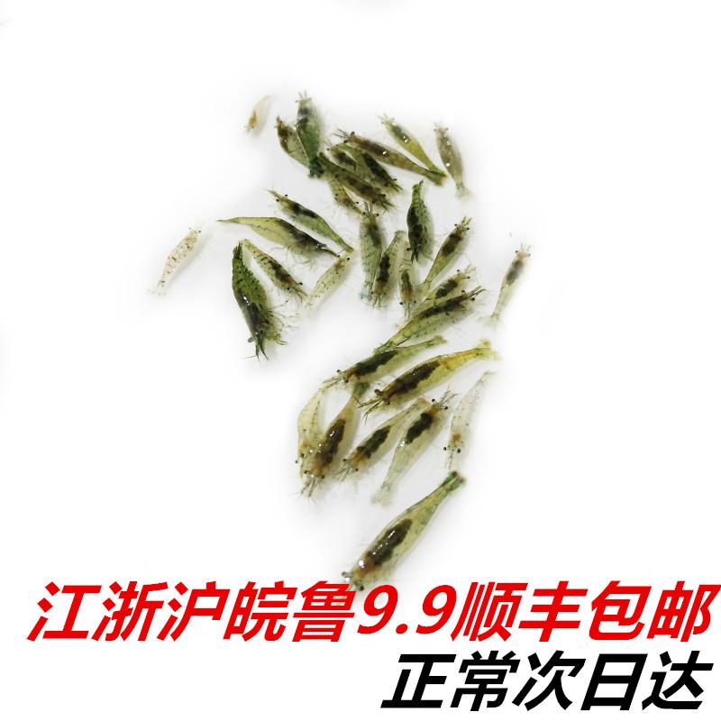 黑壳虾水草缸杂质清洁除藻水族箱