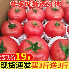 露天韵达 顺丰包邮!自然熟小西红柿新鲜蔬菜普罗旺斯番茄水果5斤图片