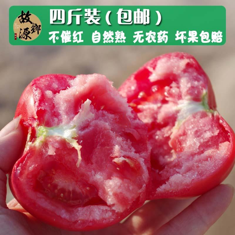 自然熟 新鲜蔬菜 西红柿 番茄 洋柿子 农家自种 不抹药