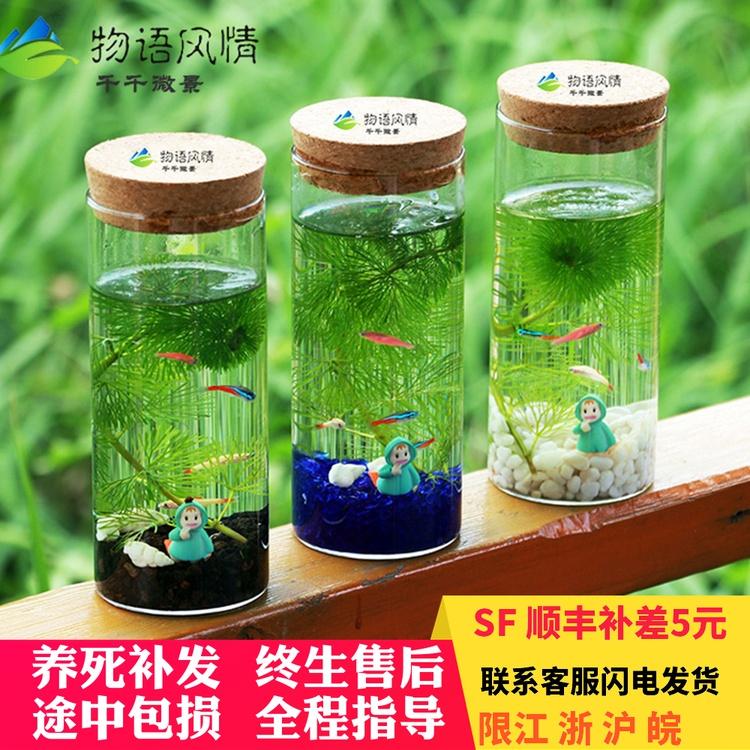 小鱼生态瓶微景观迷你水生态diy带灯鱼缸桌面玻璃鱼缸热带观赏鱼