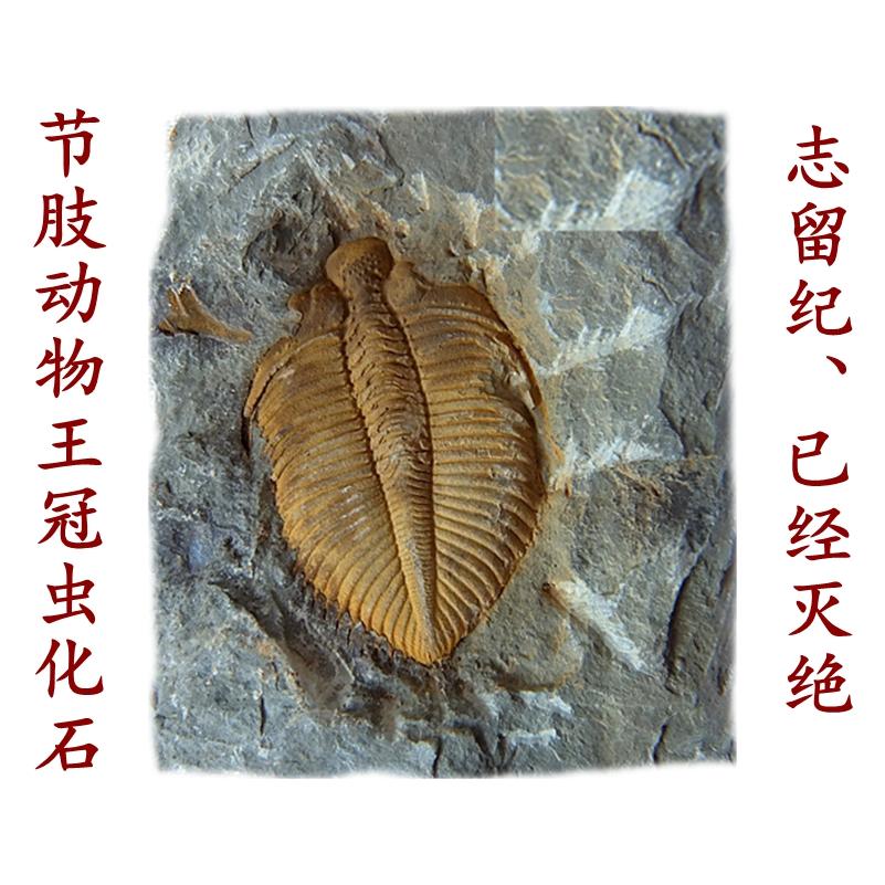 Ископаемые Артикул 607186876732
