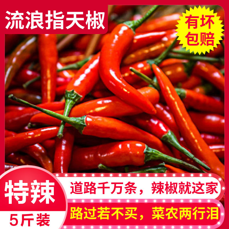 5 jin millet pepper fresh super hot Guangdong Chaotian pepper small pepper raw chili pepper farmers