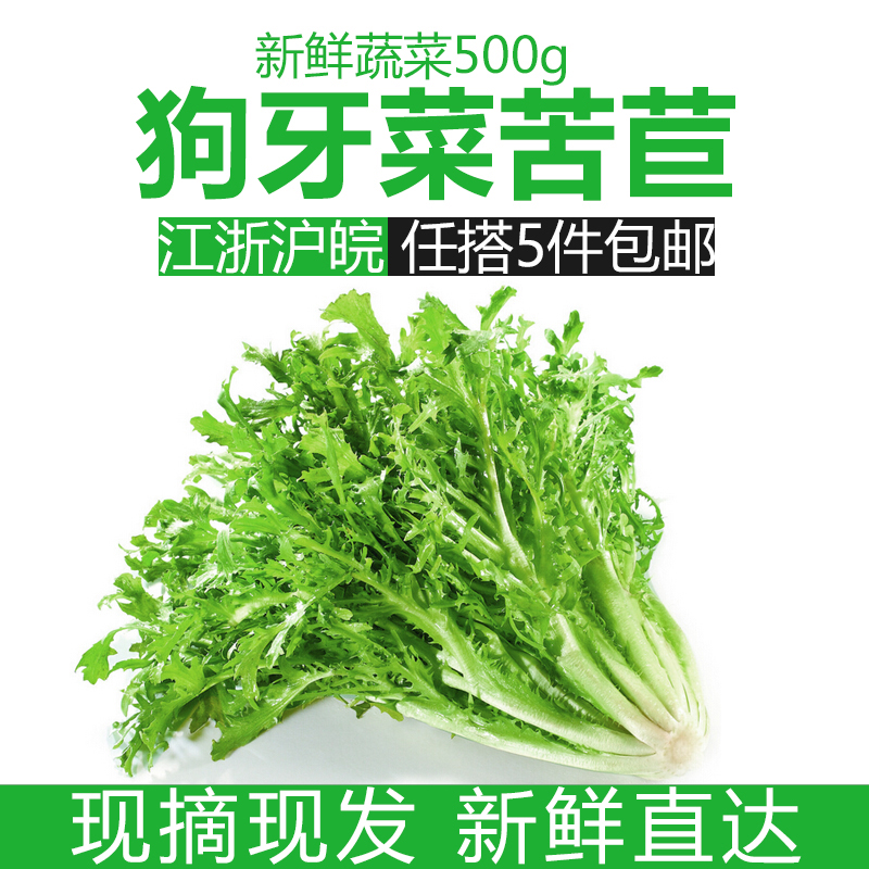新鲜蔬菜苦细叶生菜沙拉狗牙菜苦苣菜新鲜包邮做沙拉的蔬菜包邮
