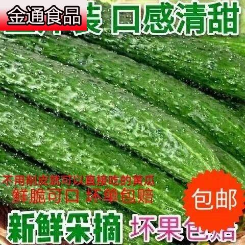 现摘山东农家蔬菜带刺水果黄瓜新鲜生吃孕妇辅食绿瓤青瓜5斤包邮