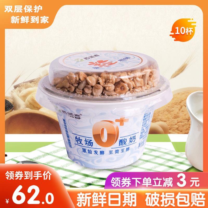 新疆西域春老酸奶牧场0+坚果整箱杯装浓缩益生菌风味发酵180g*12图片