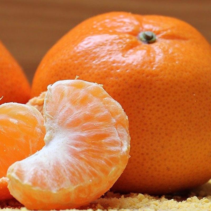 蜜桔桔子橘子5斤五斤新鲜水果孕妇酸甜薄皮当季宜昌柑橘蜜橘
