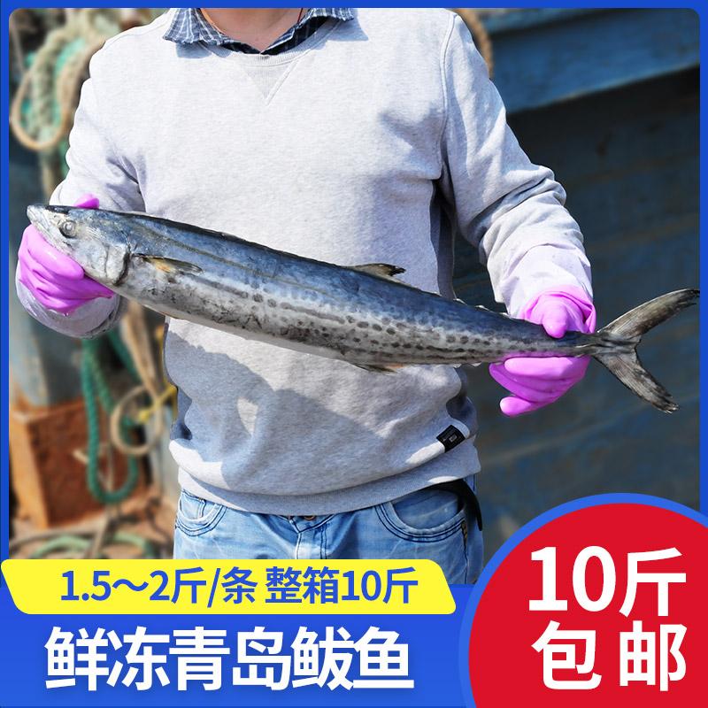 青岛本地鲅鱼新鲜鲜活冷冻10斤燕鲅鱼野生海捕海鲜整条整箱马鲛鱼