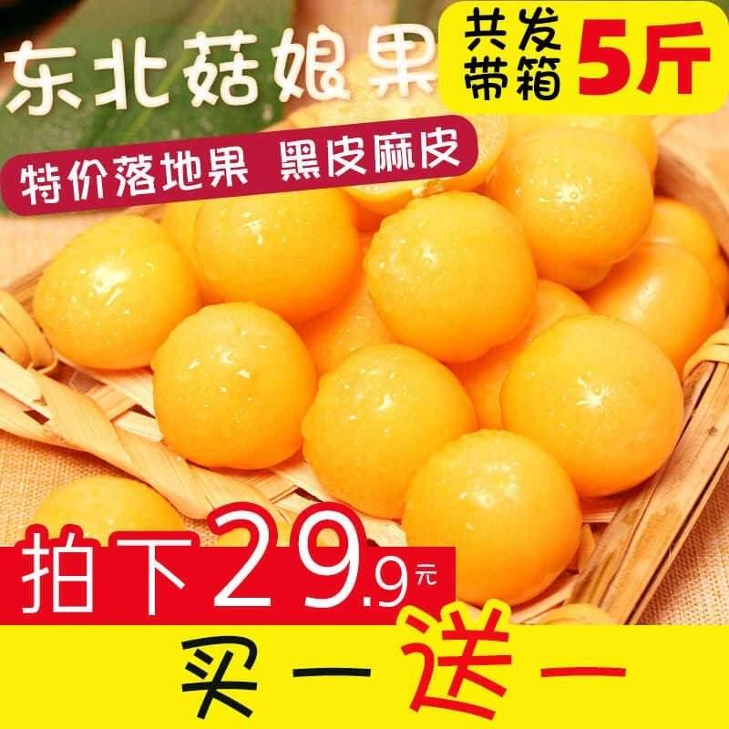 灯笼果新鲜5斤菇娘果小金豆菇茑水果东北姑娘果金姑娘黑龙江包邮