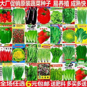 菜种籽蔬菜种子四季小香葱种韭菜大全小白菜生菜菠菜青菜香菜籽孑