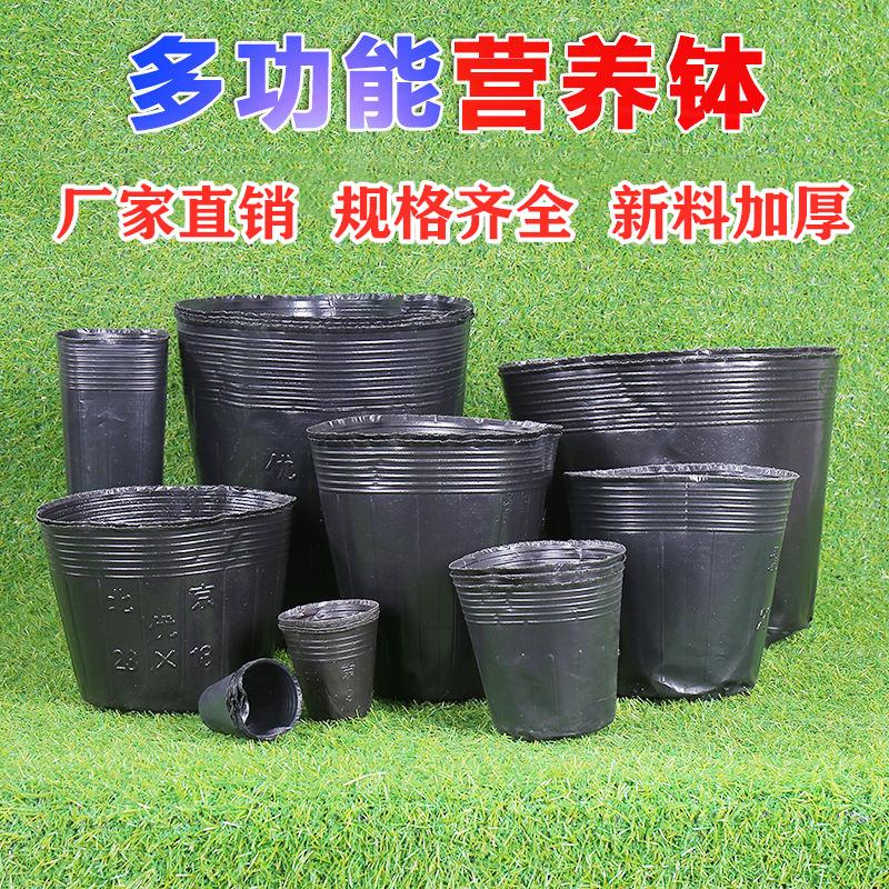 Чаши Артикул 603181137088