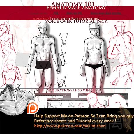 Sakimichan人体绘画入门 人体比例结构解析 插画原画基础视频教程